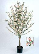 сакура цветущая, 170см
