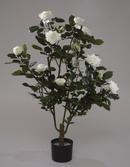 роза куст, 90см